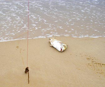 Pesca doradas desde costa