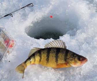 Pesca en hielo peces de agua frías