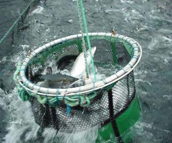 Pesca extractiva