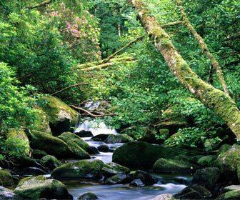 Pesca fluvial en ríos con mucha vegetación