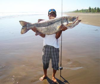 Pesca robalos en playa o costa