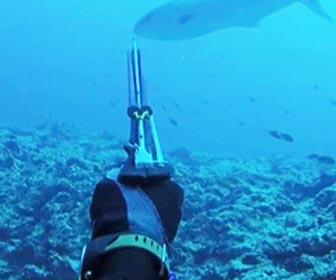 Pesca submarina al acecho