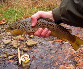 Pesca trucha comun en Leon