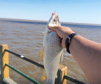 Pescando grandes bogas