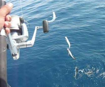 Pescando jureles a spinning desde barco