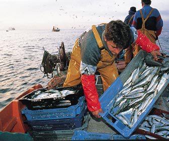 Pescando peces pesca de bajura