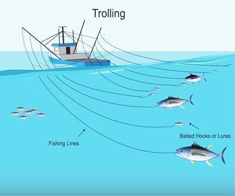 Pescar atunes al currican o trolling