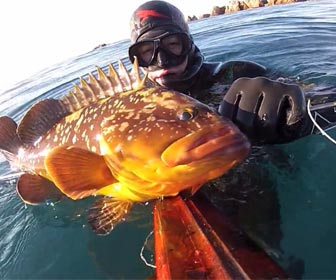 Pescar meros pesca submarina