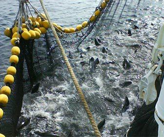 Pesqueria sobre explotacion pesquera del atun