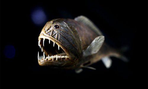 Pez Anoplogaster