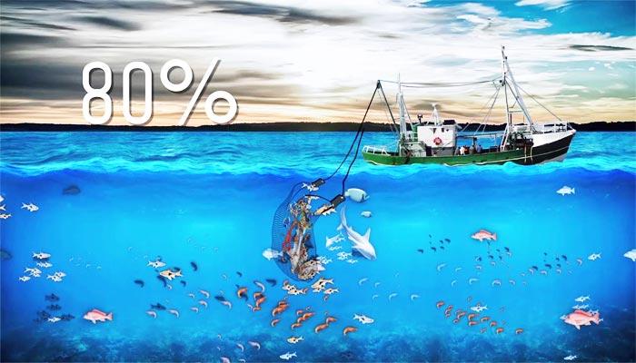 Problemas de la pesca de arrastre