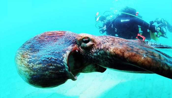 Peces de mar gigantes