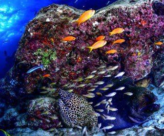 Rocas, arrecifes y restos de naufragio