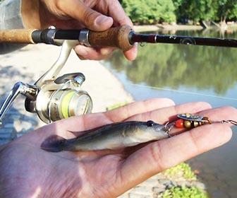 Señuelos de pesca para pejerrey spinning