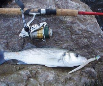 Señuelos vinilo pesca lubinas