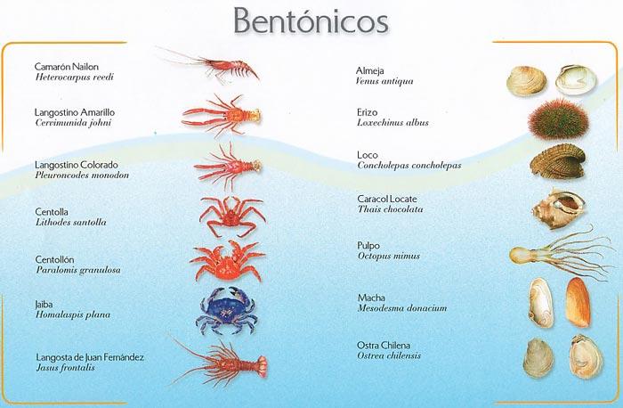 Tabla especies bentónicos