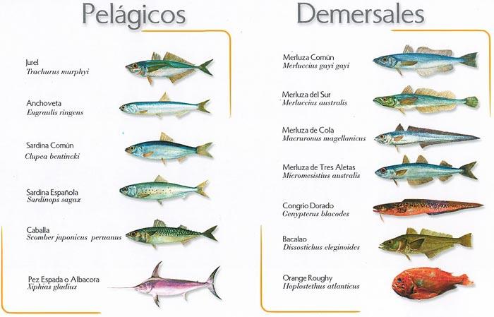 Tabla especies peces pelágicos y demersales