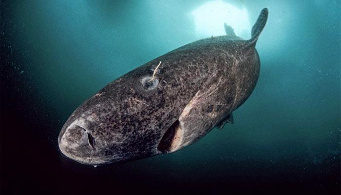 Peces gigantes del mundo