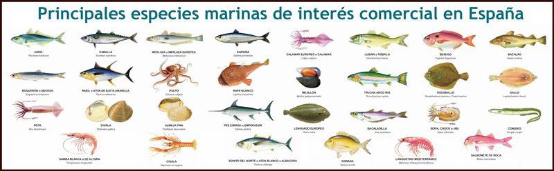 Tipos de especies de peces interes pesquero en España