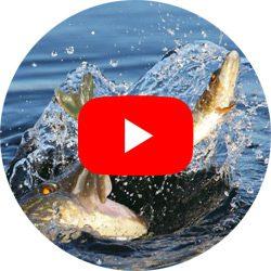 Vídeos de pesca
