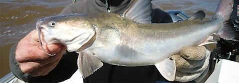 Las 5 mejores especies de peces para pescar en verano